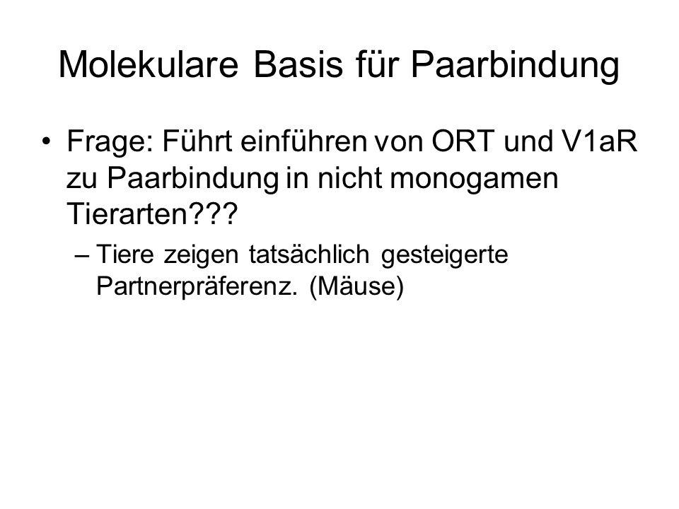 Molekulare Basis für Paarbindung Frage: Führt einführen von ORT und V1aR zu Paarbindung in nicht monogamen Tierarten .