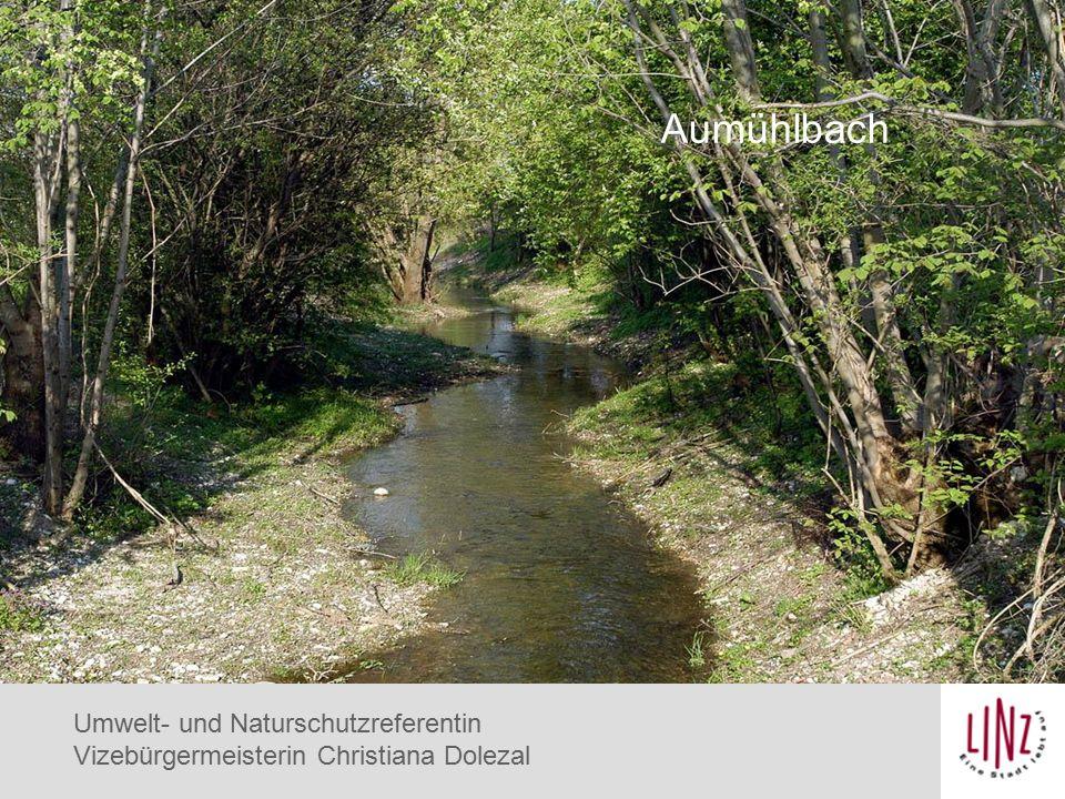 Eisvogel Aumühlbach