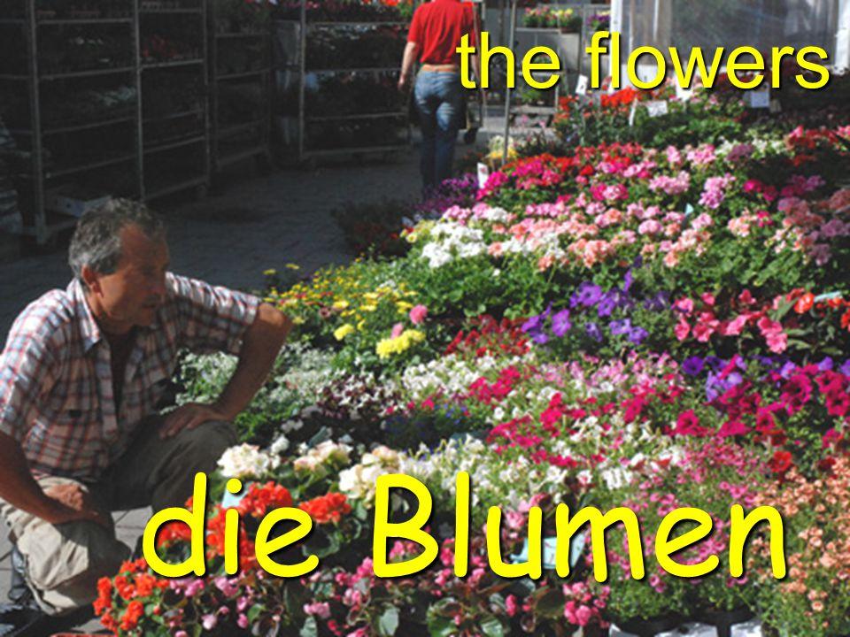 the flowers die Blumen