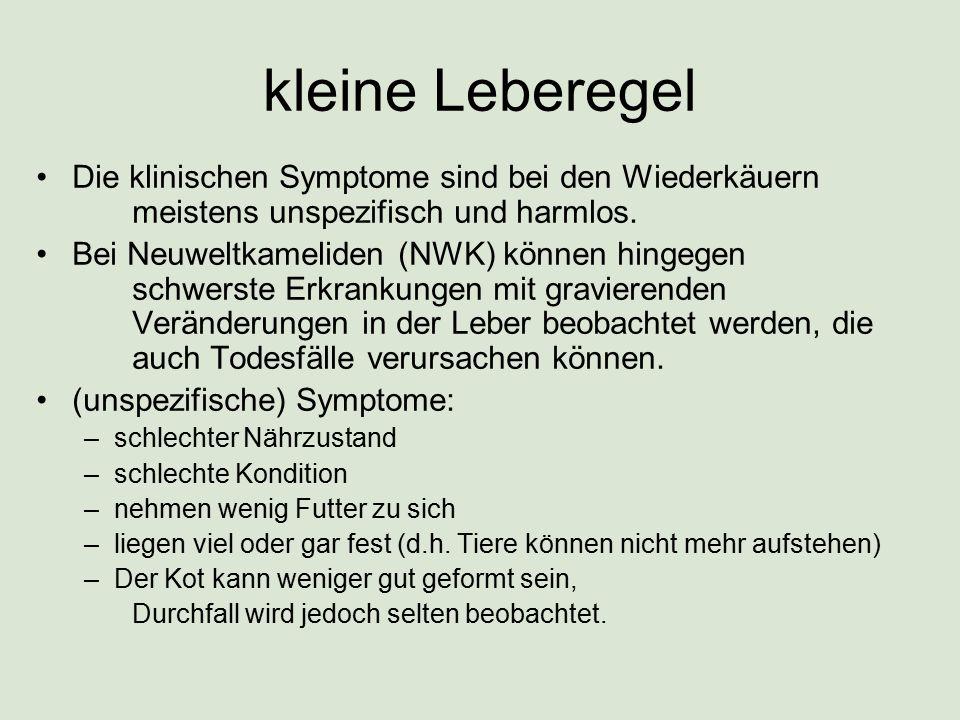 kleine Leberegel Diagnose ist schwierig.