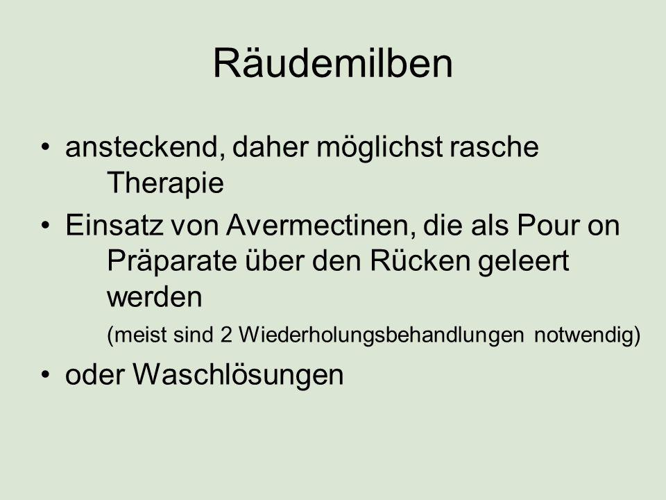 Räudemilben ansteckend, daher möglichst rasche Therapie Einsatz von Avermectinen, die als Pour on Präparate über den Rücken geleert werden (meist sind