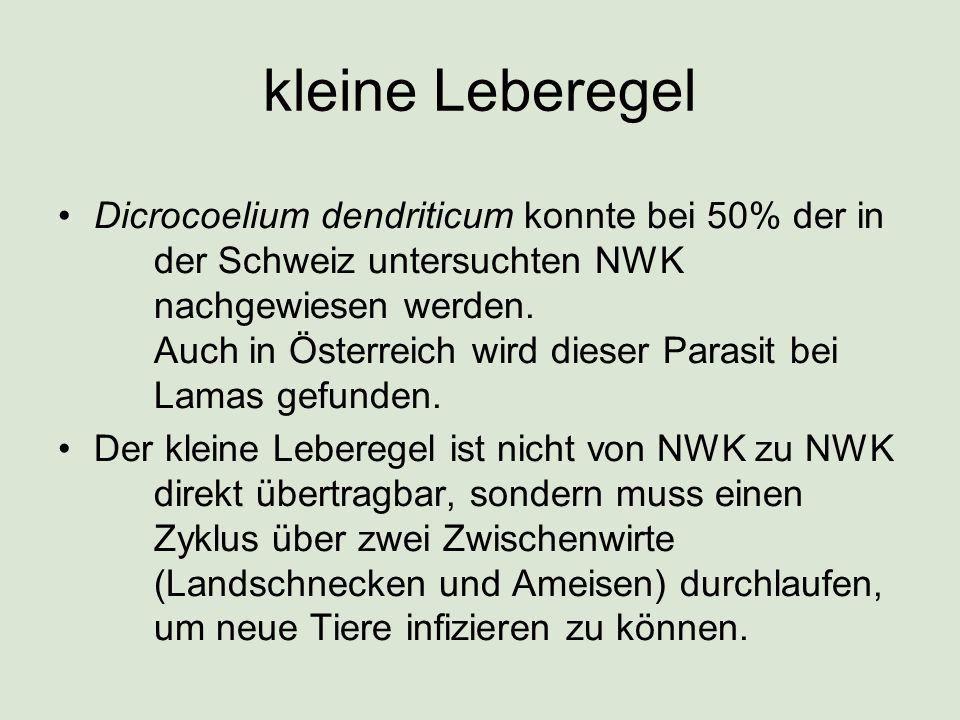 kleine Leberegel Dicrocoelium dendriticum konnte bei 50% der in der Schweiz untersuchten NWK nachgewiesen werden. Auch in Österreich wird dieser Paras