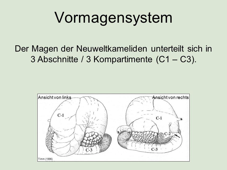 Vormagensystem Ansicht von linksAnsicht von rechts Timm (1996) Der Magen der Neuweltkameliden unterteilt sich in 3 Abschnitte / 3 Kompartimente (C1 –