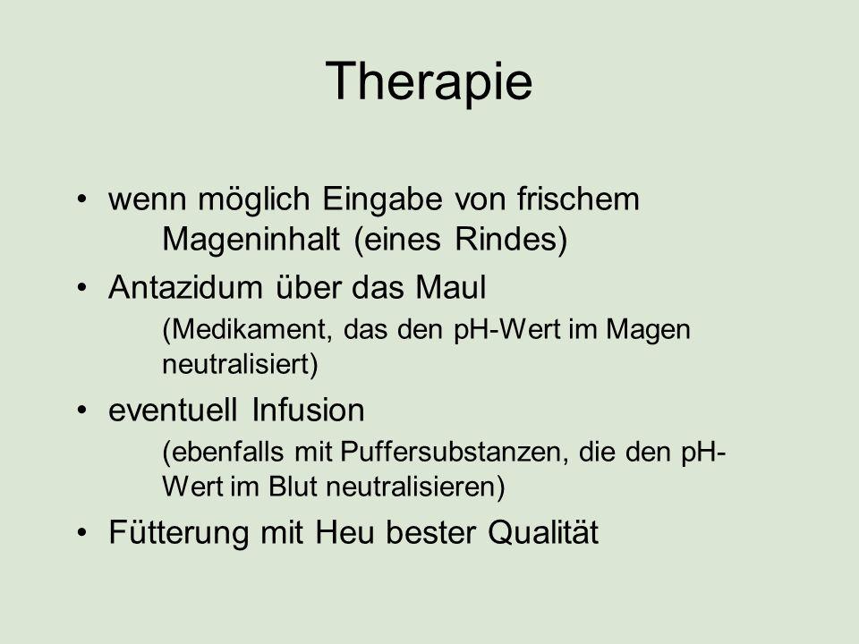 Therapie wenn möglich Eingabe von frischem Mageninhalt (eines Rindes) Antazidum über das Maul (Medikament, das den pH-Wert im Magen neutralisiert) eve