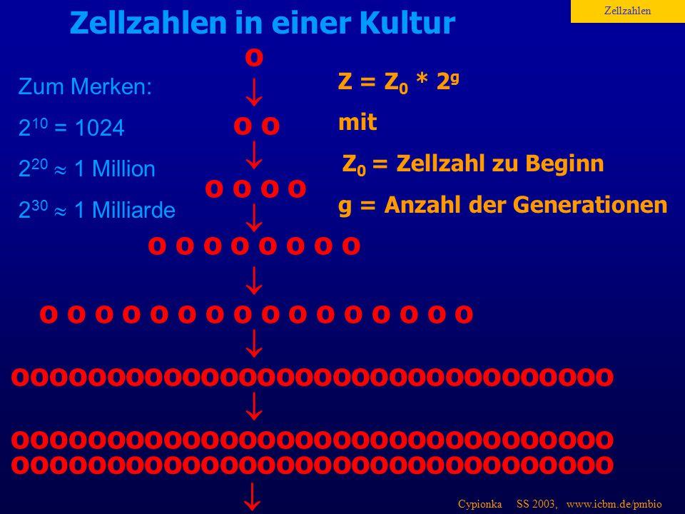 Cypionka SS 2003, www.icbm.de/pmbio o  Zellzahlen in einer Kultur Z = Z 0 * 2 g mit Z 0 = Zellzahl zu Beginn g = Anzahl der Generationen Zellzahlen o