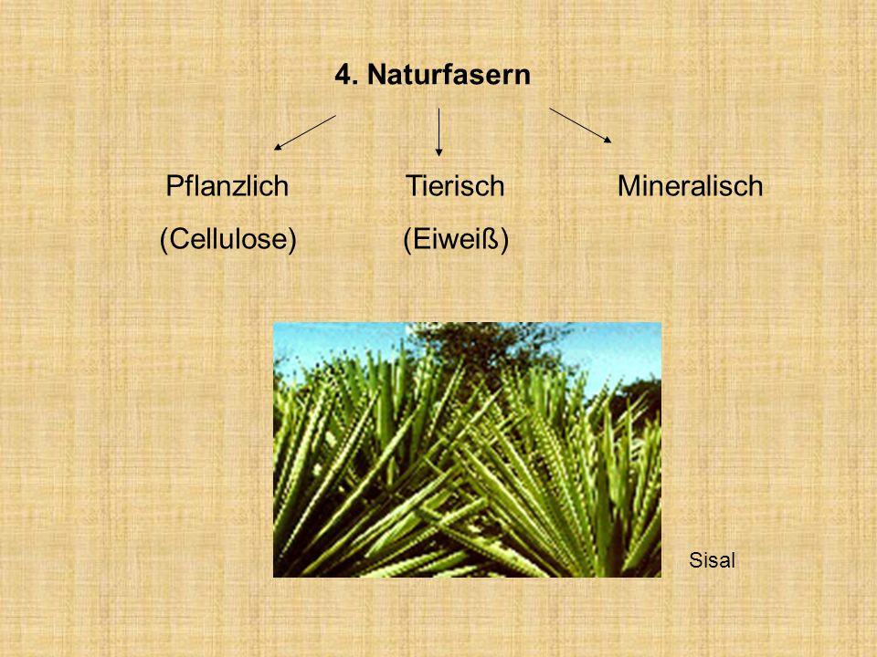 4. Naturfasern Tierisch (Eiweiß) Pflanzlich (Cellulose) Mineralisch Sisal