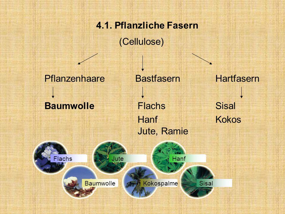 4.1. Pflanzliche Fasern (Cellulose) Pflanzenhaare BastfasernHartfasern Baumwolle FlachsSisal HanfKokos Jute, Ramie FlachsJuteHanf BaumwolleKokospalmeS