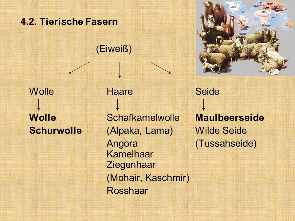 4.2. Tierische Fasern (Eiweiß) WolleHaareSeide WolleSchafkamelwolleMaulbeerseide Schurwolle (Alpaka, Lama)Wilde Seide Angora (Tussahseide) Kamelhaar Z