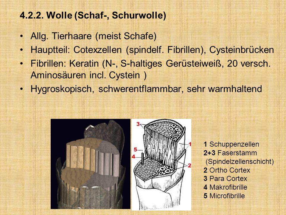 4.2.2. Wolle (Schaf-, Schurwolle) Allg. Tierhaare (meist Schafe) Hauptteil: Cotexzellen (spindelf. Fibrillen), Cysteinbrücken Fibrillen: Keratin (N-,
