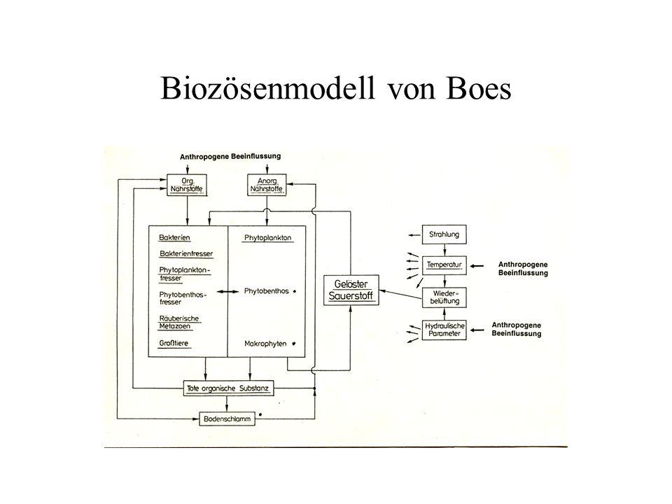 Biozösenmodell von Boes