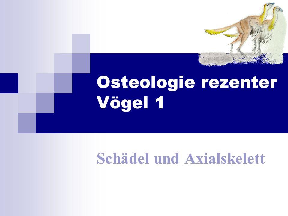 Osteologie rezenter Vögel 1 Schädel und Axialskelett