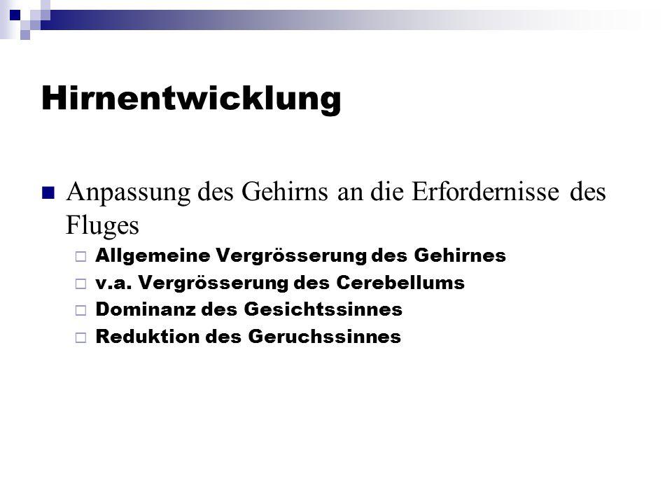 Hirnentwicklung Anpassung des Gehirns an die Erfordernisse des Fluges  Allgemeine Vergrösserung des Gehirnes  v.a.