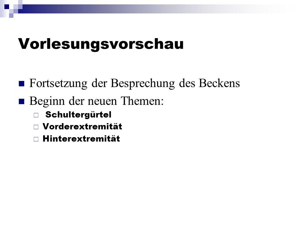 Vorlesungsvorschau Fortsetzung der Besprechung des Beckens Beginn der neuen Themen:  Schultergürtel  Vorderextremität  Hinterextremität