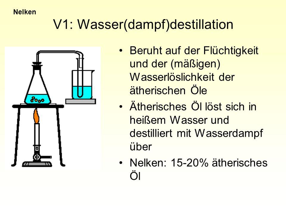 V1: Wasser(dampf)destillation Nelken Beruht auf der Flüchtigkeit und der (mäßigen) Wasserlöslichkeit der ätherischen Öle Ätherisches Öl löst sich in h