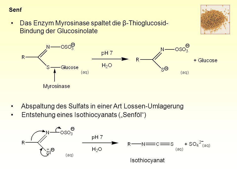 Das Enzym Myrosinase spaltet die β-Thioglucosid- Bindung der Glucosinolate Senf Abspaltung des Sulfats in einer Art Lossen-Umlagerung Entstehung eines