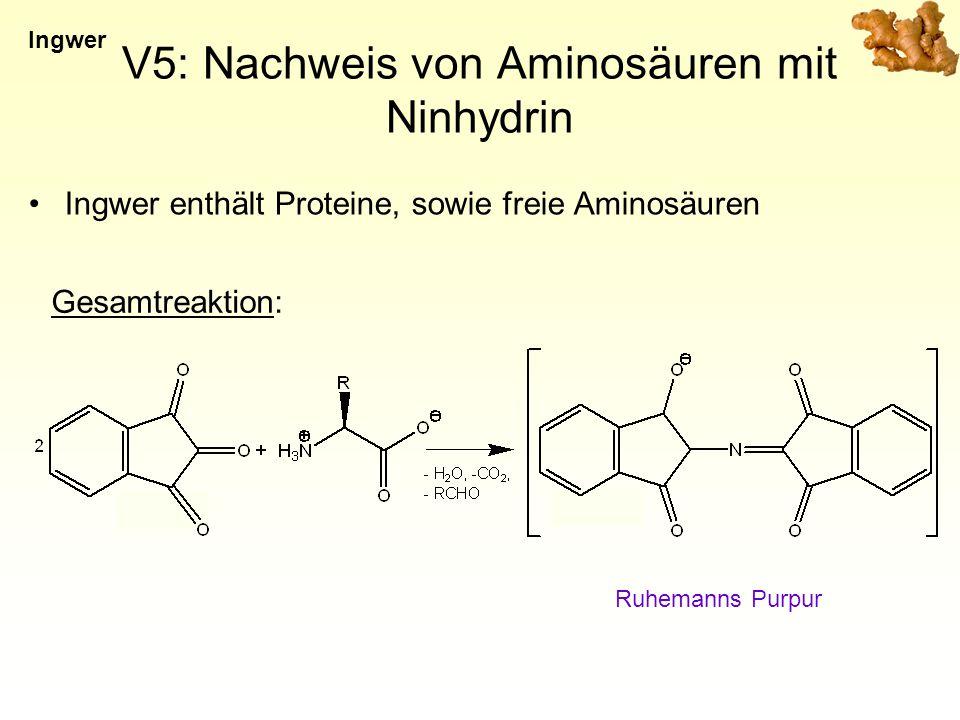 V5: Nachweis von Aminosäuren mit Ninhydrin Ingwer enthält Proteine, sowie freie Aminosäuren Ingwer Ruhemanns Purpur Gesamtreaktion: