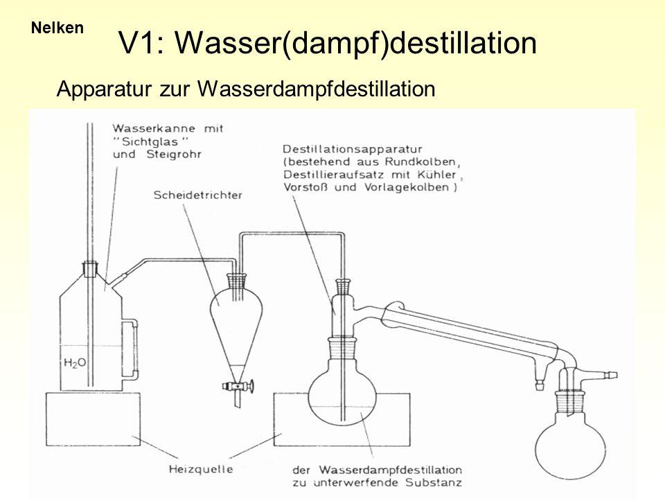 V1: Wasser(dampf)destillation Nelken Beruht auf der Flüchtigkeit und der (mäßigen) Wasserlöslichkeit der ätherischen Öle Ätherisches Öl löst sich in heißem Wasser und destilliert mit Wasserdampf über Nelken: 15-20% ätherisches Öl