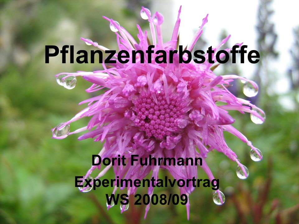 32 Verantwortliche Substanzen: Anthocyane (Cyanidin) 6. Flavonoide