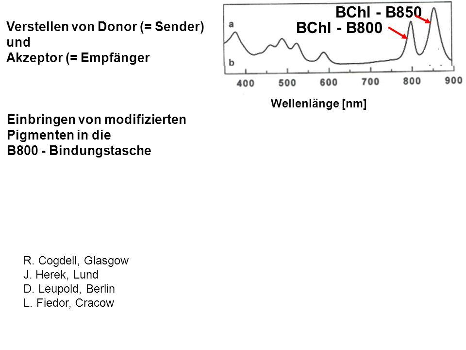Mainz StGen 090527 (H.