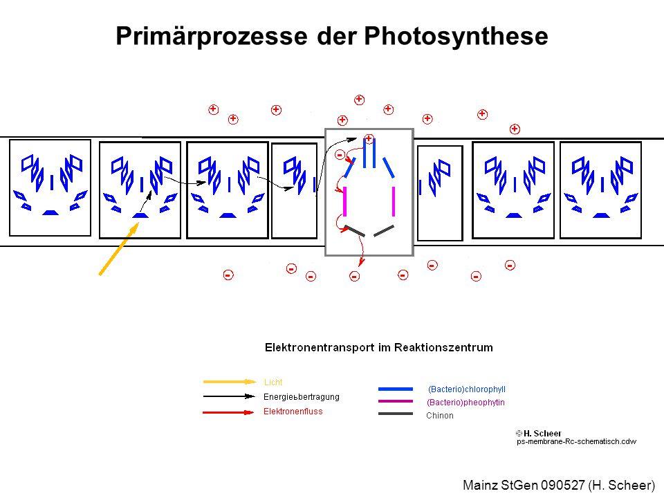 Mainz StGen 090527 (H. Scheer) Modell des bakteriellen Photosynthese-Komplexes