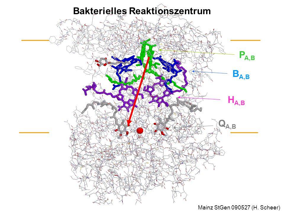 Bakterielles Reaktionszentrum P A,B B A,B H A,B Q A,B