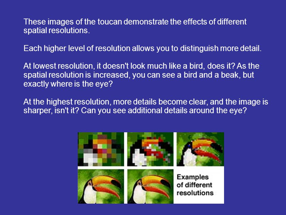These images of the toucan demonstrate the effects of different spatial resolutions.