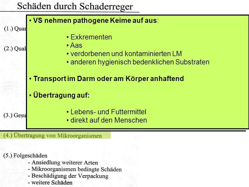 VS nehmen pathogene Keime auf aus: Exkrementen Aas verdorbenen und kontaminierten LM anderen hygienisch bedenklichen Substraten Transport im Darm oder am Körper anhaftend Übertragung auf: Lebens- und Futtermittel direkt auf den Menschen