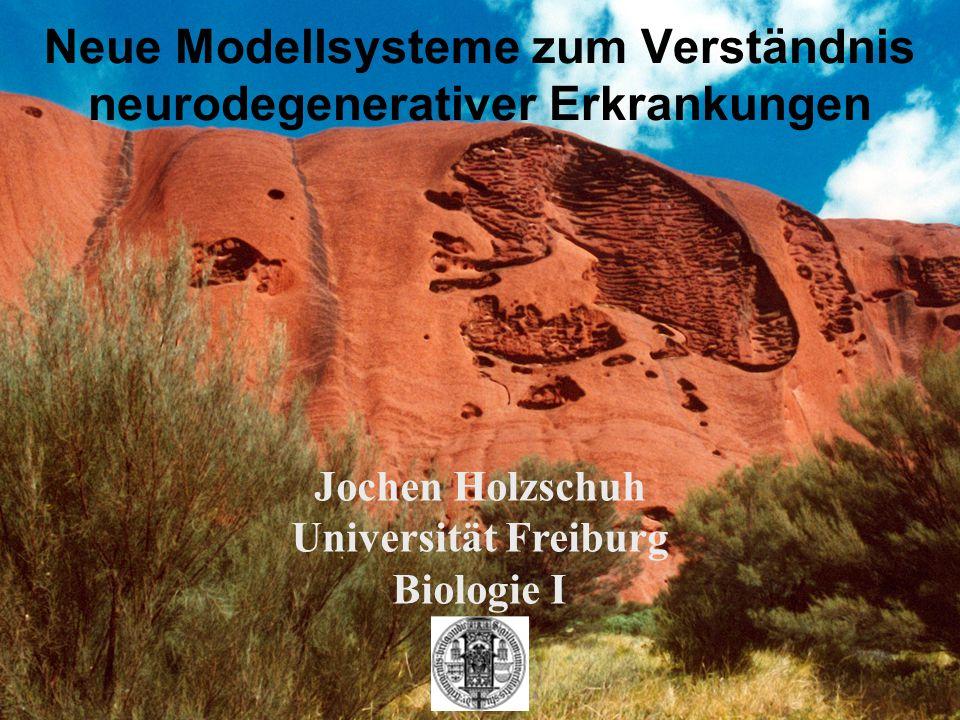 Neue Modellsysteme zum Verständnis neurodegenerativer Erkrankungen Jochen Holzschuh Universität Freiburg Biologie I