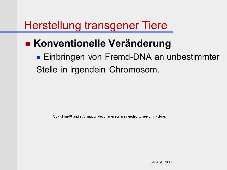 Herstellung transgener Tiere Konventionelle Veränderung Einbringen von Fremd-DNA an unbestimmter Stelle in irgendein Chromosom. Lodish et al. 2000