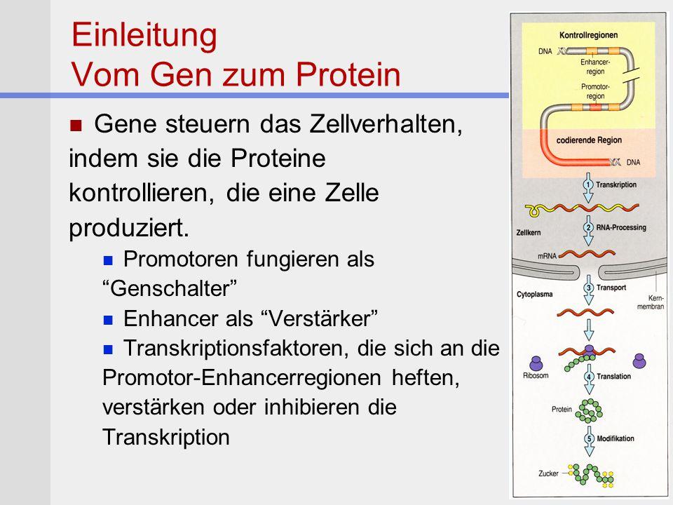 Morbus Alzheimer Pathologie Bildung von Fibrillenveränderungen und pathologischen Ablagerungen in der Hirnrinde Senile Plaques mit Amyloid ß-Protein Neurofibrilären Knäulen des TAU Proteins