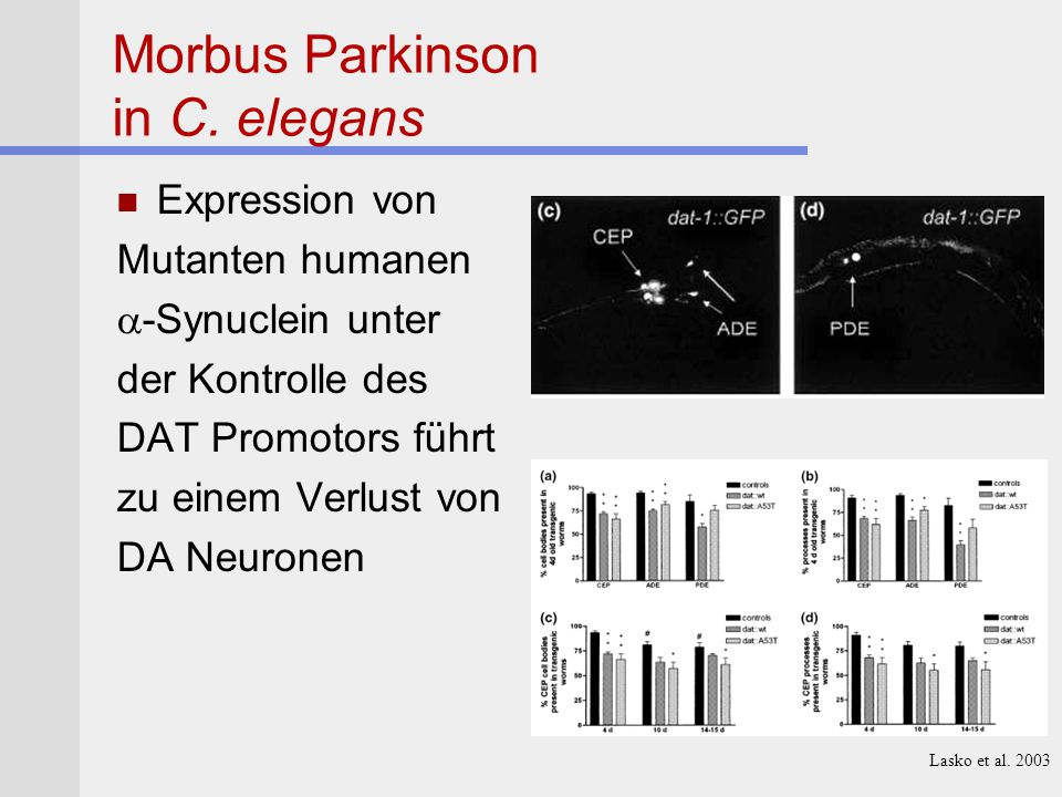Morbus Parkinson in C.