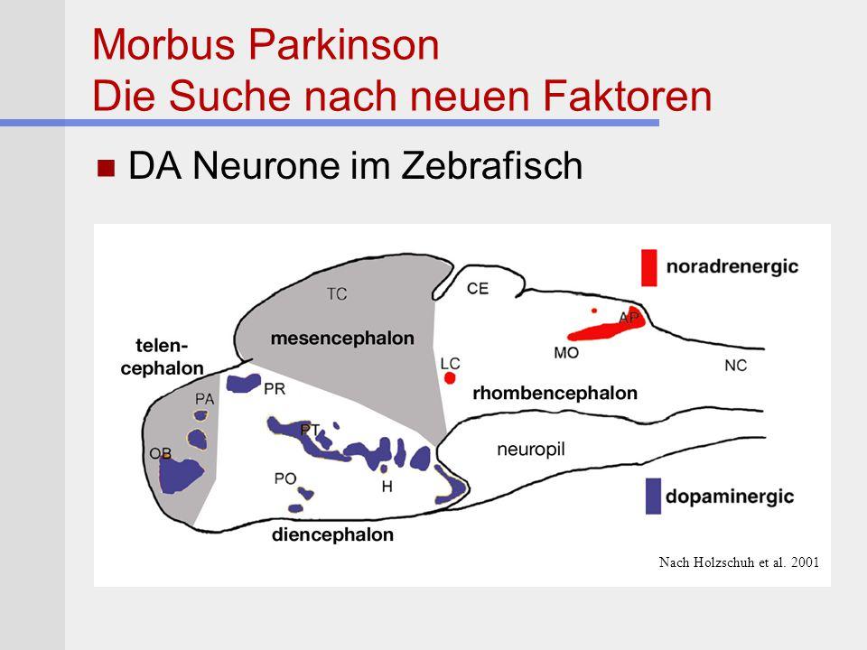 Morbus Parkinson Die Suche nach neuen Faktoren DA Neurone im Zebrafisch Nach Holzschuh et al. 2001