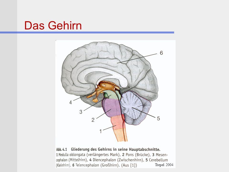 Morbus Parkinson Pathologie Primär degenerativ.