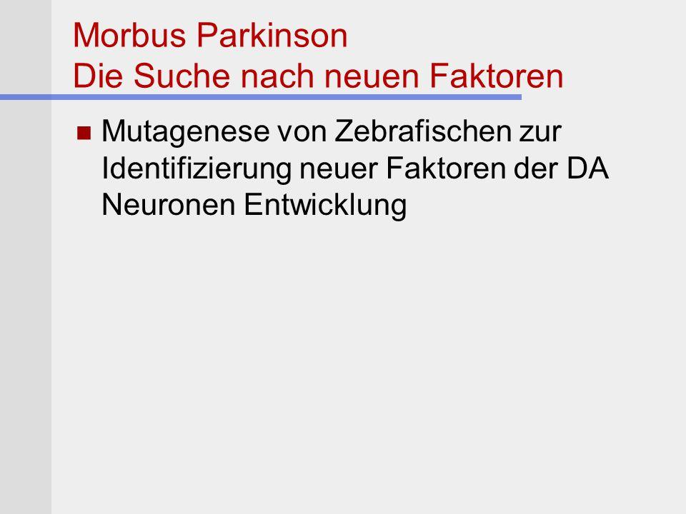 Morbus Parkinson Die Suche nach neuen Faktoren Mutagenese von Zebrafischen zur Identifizierung neuer Faktoren der DA Neuronen Entwicklung