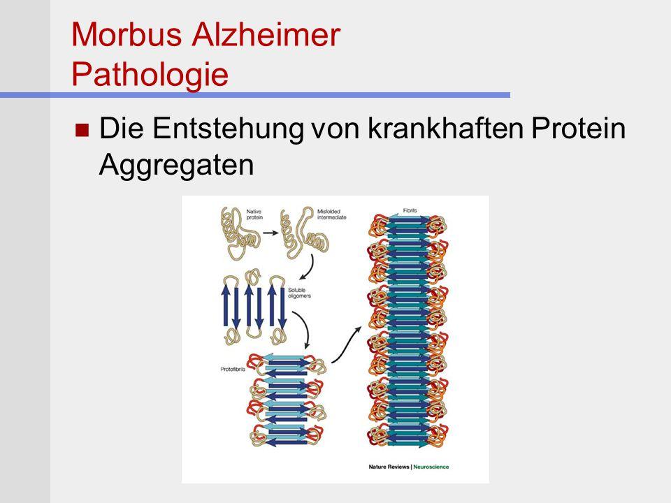 Morbus Alzheimer Pathologie Die Entstehung von krankhaften Protein Aggregaten