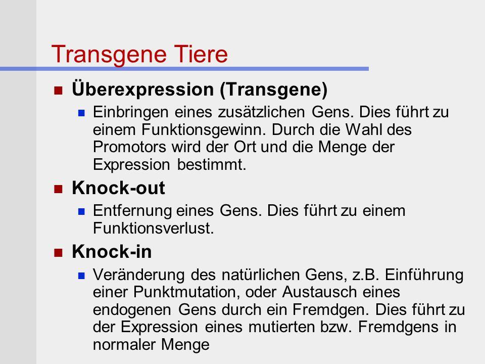 Transgene Tiere Überexpression (Transgene) Einbringen eines zusätzlichen Gens. Dies führt zu einem Funktionsgewinn. Durch die Wahl des Promotors wird