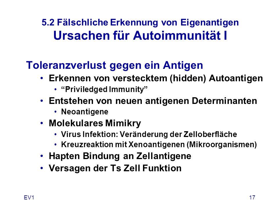 EV117 5.2 Fälschliche Erkennung von Eigenantigen Ursachen für Autoimmunität I Toleranzverlust gegen ein Antigen Erkennen von verstecktem (hidden) Auto