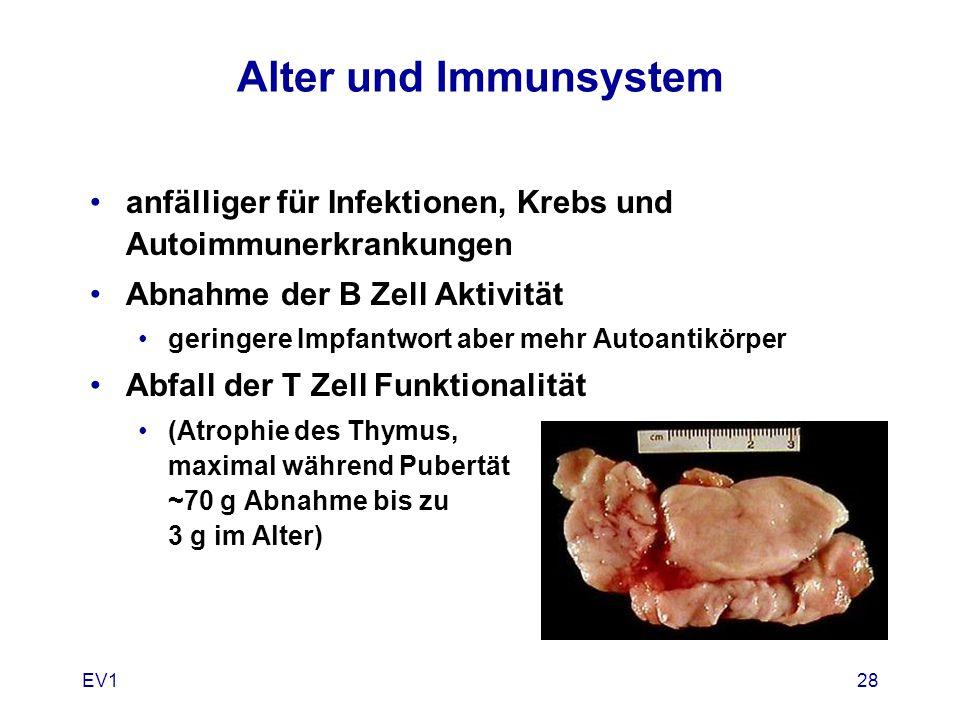 EV128 Alter und Immunsystem anfälliger für Infektionen, Krebs und Autoimmunerkrankungen Abnahme der B Zell Aktivität geringere Impfantwort aber mehr A