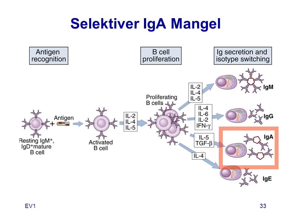 EV133 Selektiver IgA Mangel