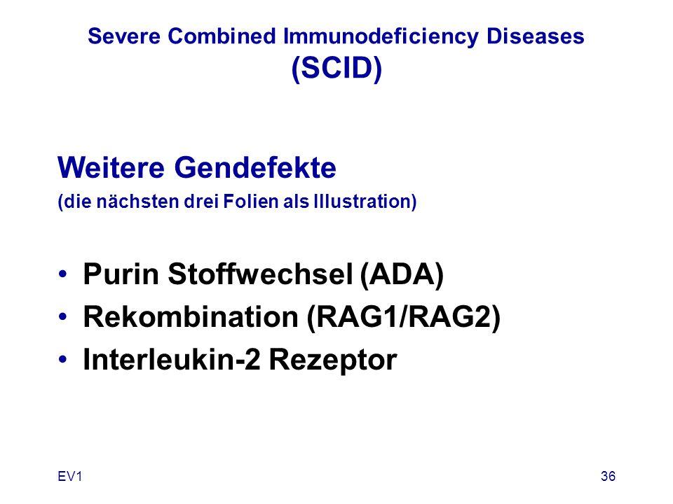 EV136 Severe Combined Immunodeficiency Diseases (SCID) Weitere Gendefekte (die nächsten drei Folien als Illustration) Purin Stoffwechsel (ADA) Rekombi