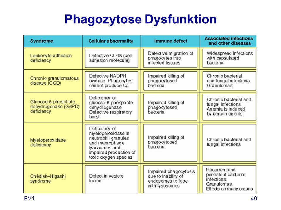 EV140 Phagozytose Dysfunktion