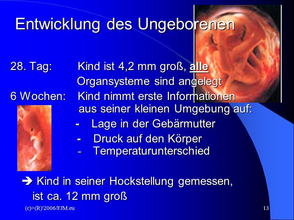 (c)+(R) 2006/FJM.eu12 Entwicklung des Ungeborenen 15.