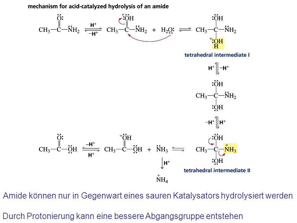 Amide können nur in Gegenwart eines sauren Katalysators hydrolysiert werden Durch Protonierung kann eine bessere Abgangsgruppe entstehen