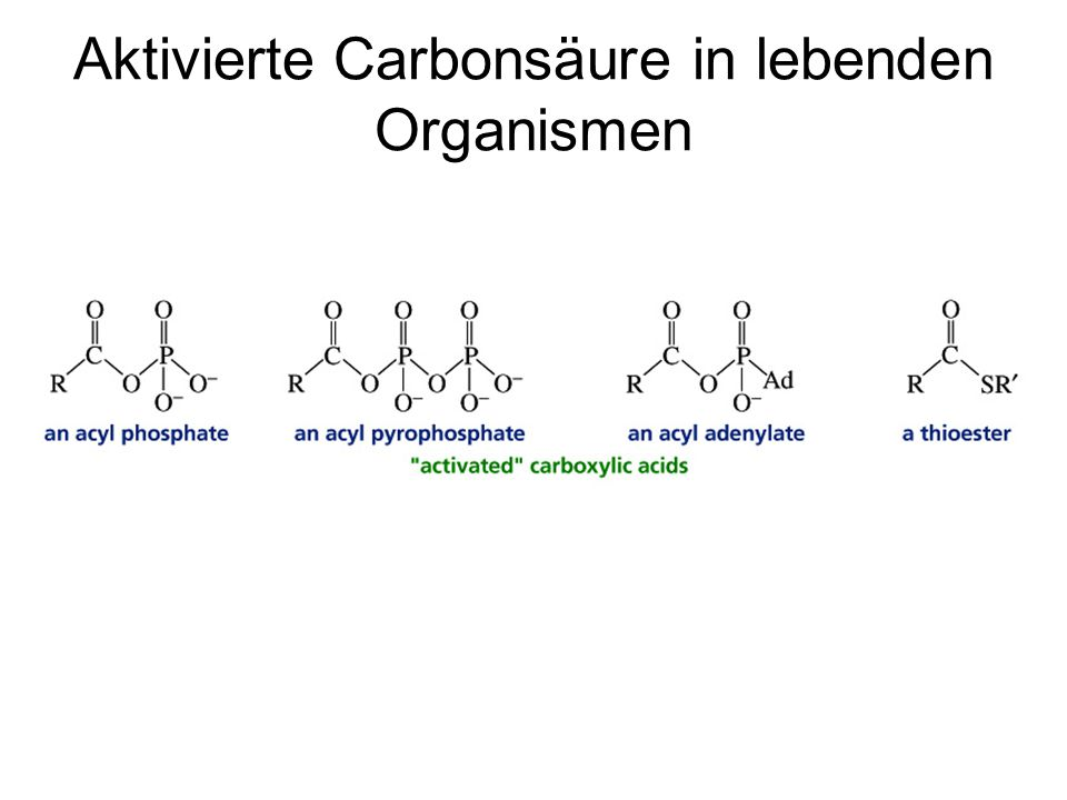 Aktivierte Carbonsäure in lebenden Organismen