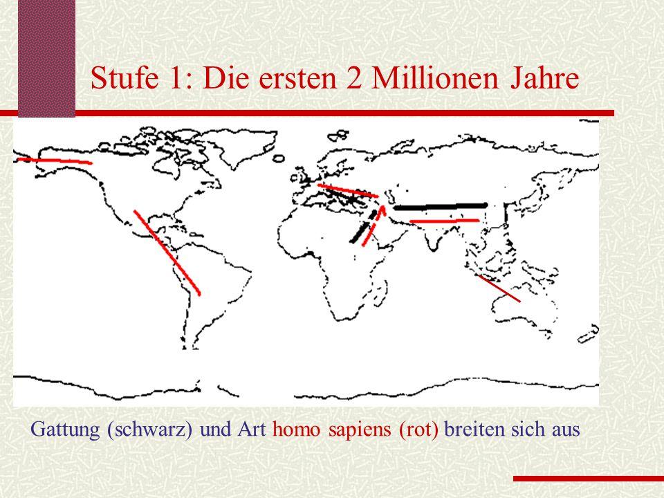 Stufe 1: Die ersten 2 Millionen Jahre Gattung (schwarz) und Art homo sapiens (rot) breiten sich aus
