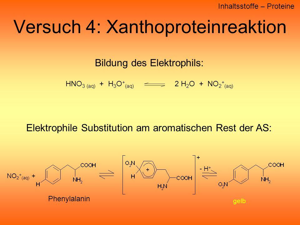 Versuch 4: Xanthoproteinreaktion Inhaltsstoffe – Proteine Bildung des Elektrophils: HNO 3 (aq) + H 3 O + (aq) 2 H 2 O + NO 2 + (aq) Elektrophile Substitution am aromatischen Rest der AS: Phenylalanin NO 2 + (aq) + + - H + gelb +