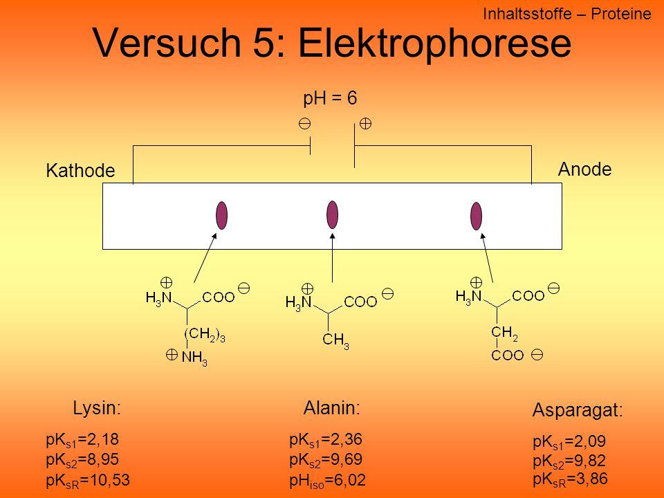 Versuch 5: Elektrophorese Inhaltsstoffe – Proteine Anode Kathode pH = 6 Alanin: pK s1 =2,36 pK s2 =9,69 pH iso =6,02 Asparagat: pK s1 =2,09 pK s2 =9,82 pK sR =3,86 Lysin: pK s1 =2,18 pK s2 =8,95 pK sR =10,53