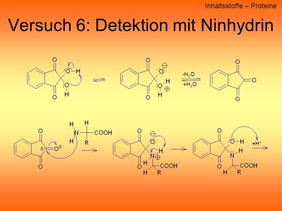 Versuch 6: Detektion mit Ninhydrin -H 2 O +H 2 O +H + δ+δ+ δ-δ- Inhaltsstoffe – Proteine