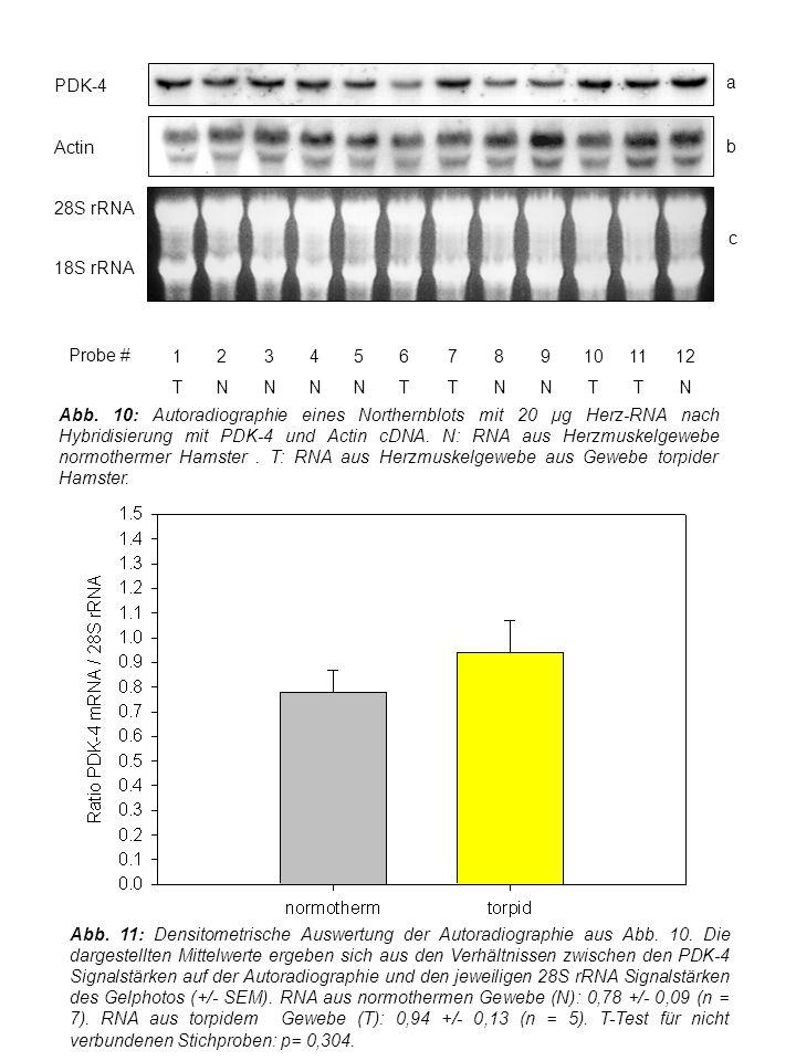 Abb. 11: Densitometrische Auswertung der Autoradiographie aus Abb.