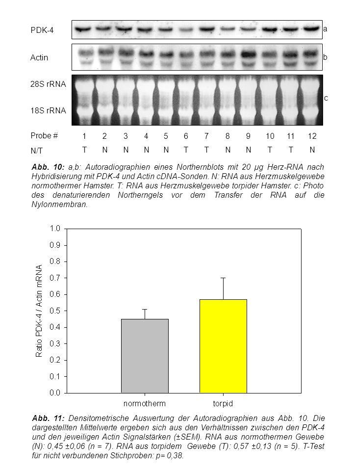 Abb. 11: Densitometrische Auswertung der Autoradiographien aus Abb.
